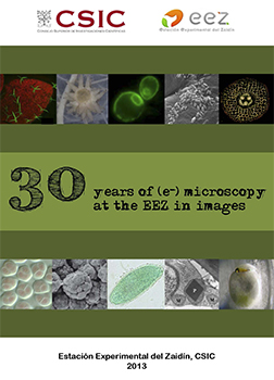 30 years of (e-) microscopy at the EEZ in images